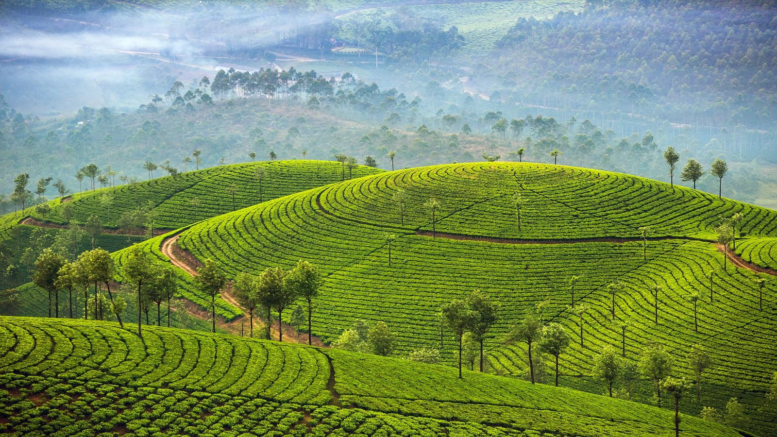 Essential Kerala