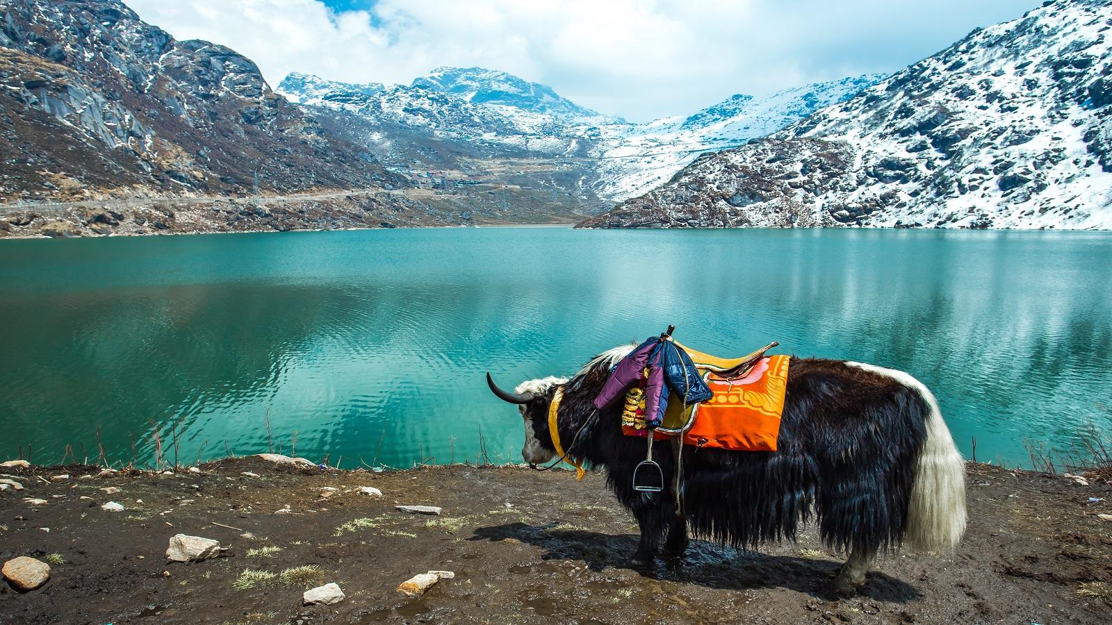 Ladakh Heights